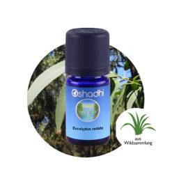 oshadhi eucalyptus radiata eterisk olje