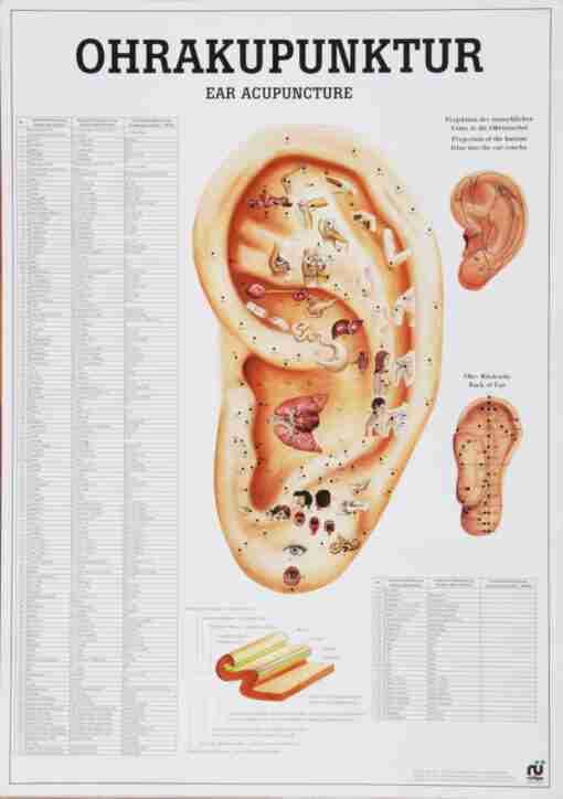 plakat øreakupunktur