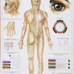 plakat akupunktur kropp