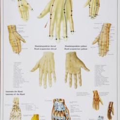 plakat håndakupunktur
