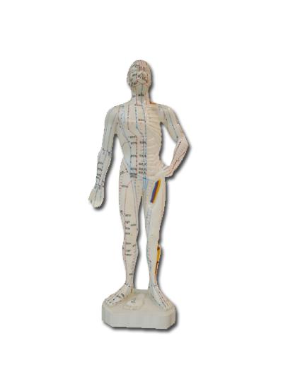 Modell kropp 26 cm