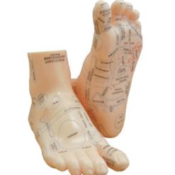 modell fot akupunkturpunkter