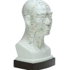 modell hode akupunkturpunkter