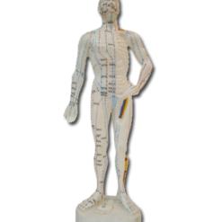 modell akupunktur kropp